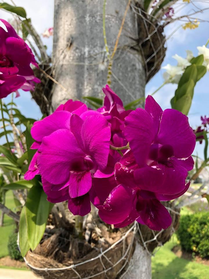 Fuschia orchid.