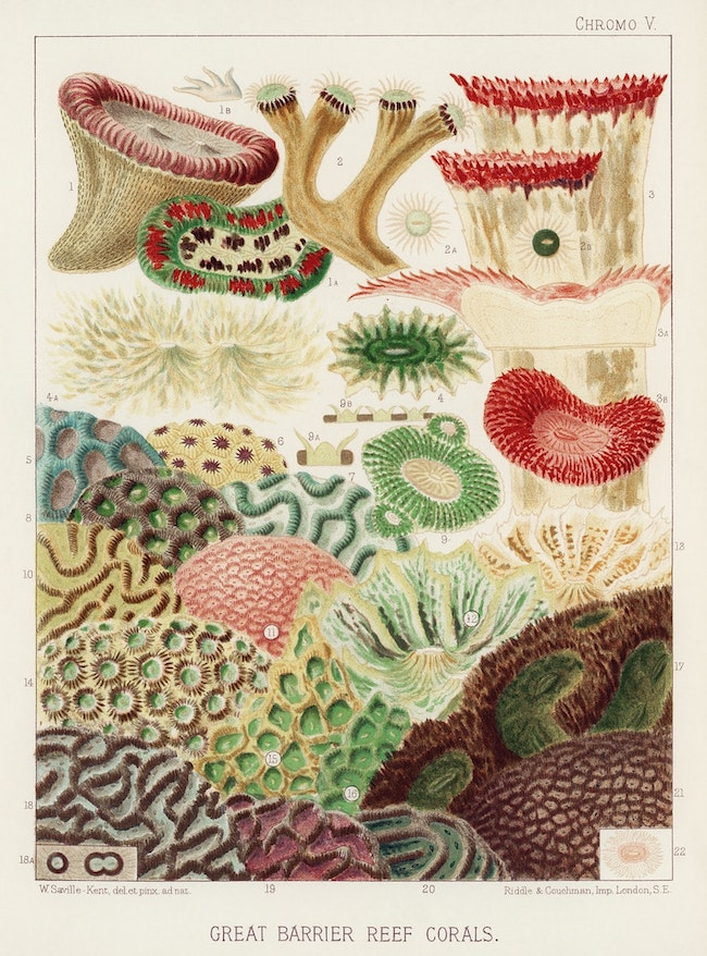 Great barrier reef corals.