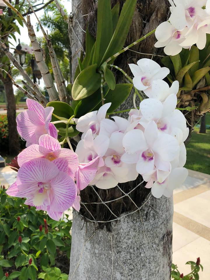 Pink and white orchids.