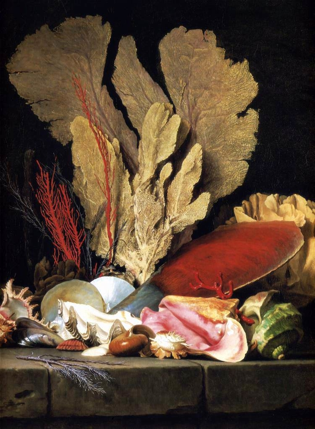 """Still-Life with Tuft of Marine Plants, Shells and Corals."" 1769."