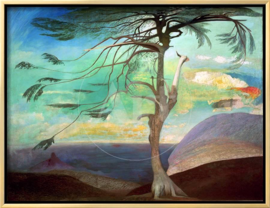 """""""The solitary cedar.""""1907."""