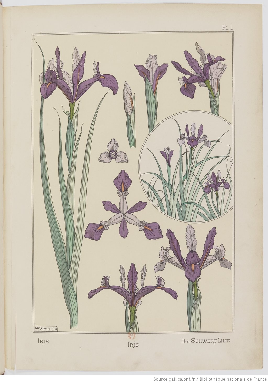"""The sword lily."" Plate I. Image 17."