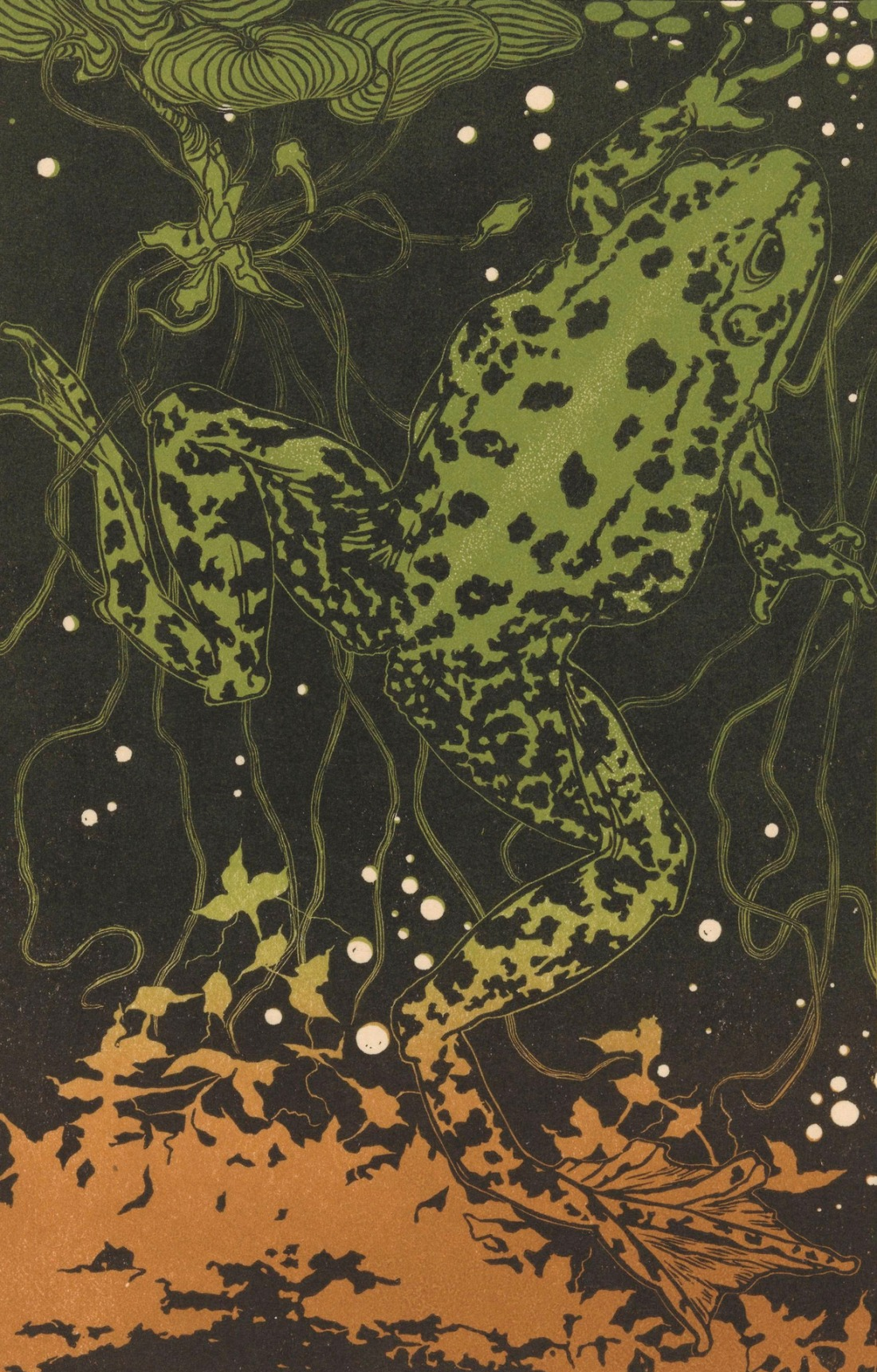 """Swimming Frog."" Undated."