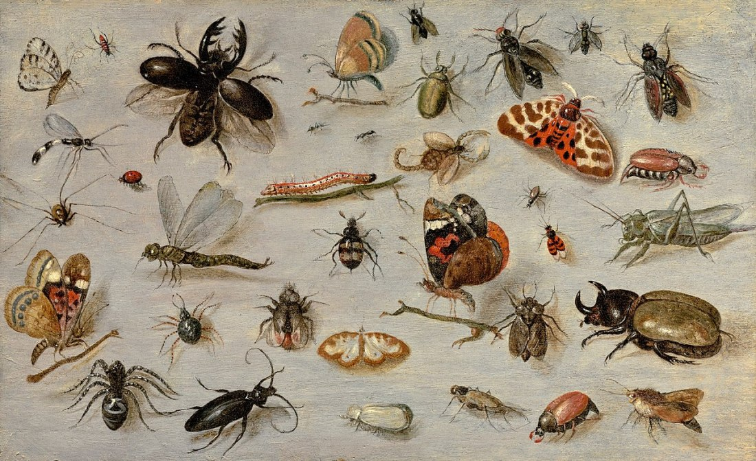"""A Study of Butterflies, Moths, Spiders, and Insects."" Undated."