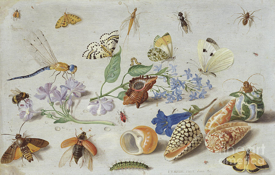 """Butterflies and other Insects."" 1661."