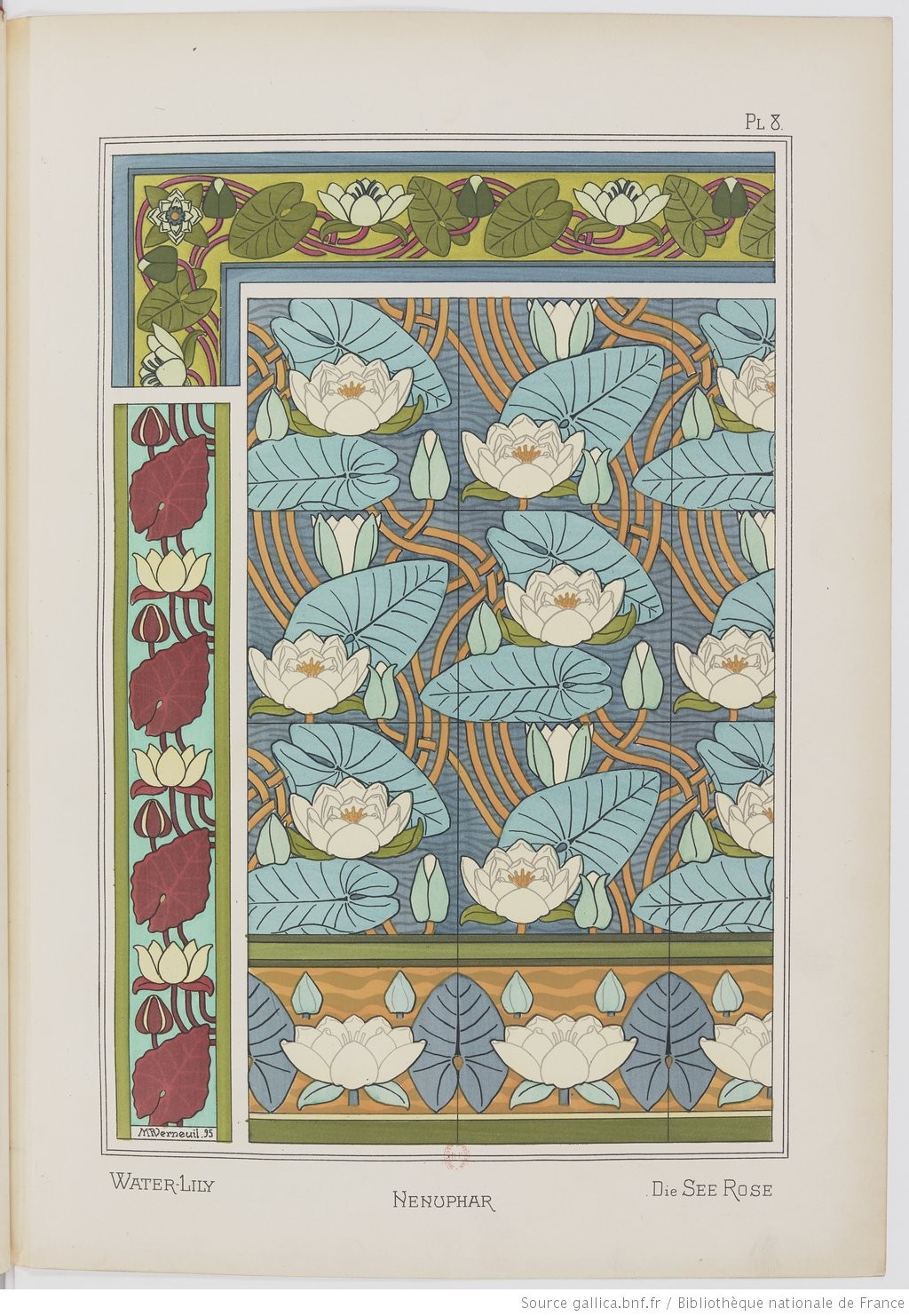 Waterlily. Image 19. Plate VIII.