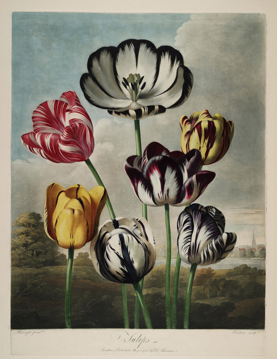 """Tulips."" 1807."