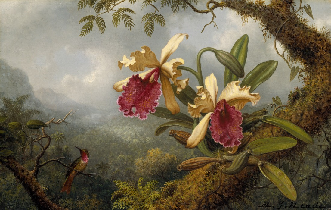 """Orchids and Hummingbird."" Probably 19th c."