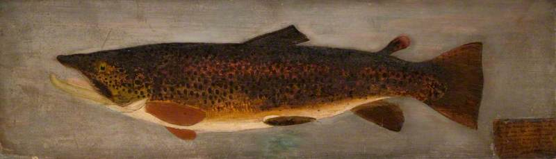 """Brown Trout."" 1878."