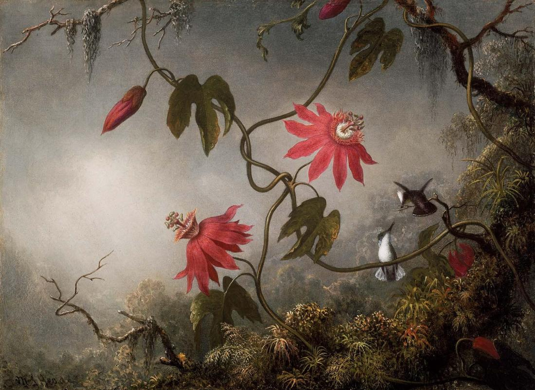 """Passion Flowers and Hummingbirds."" ca. 1870-1873."