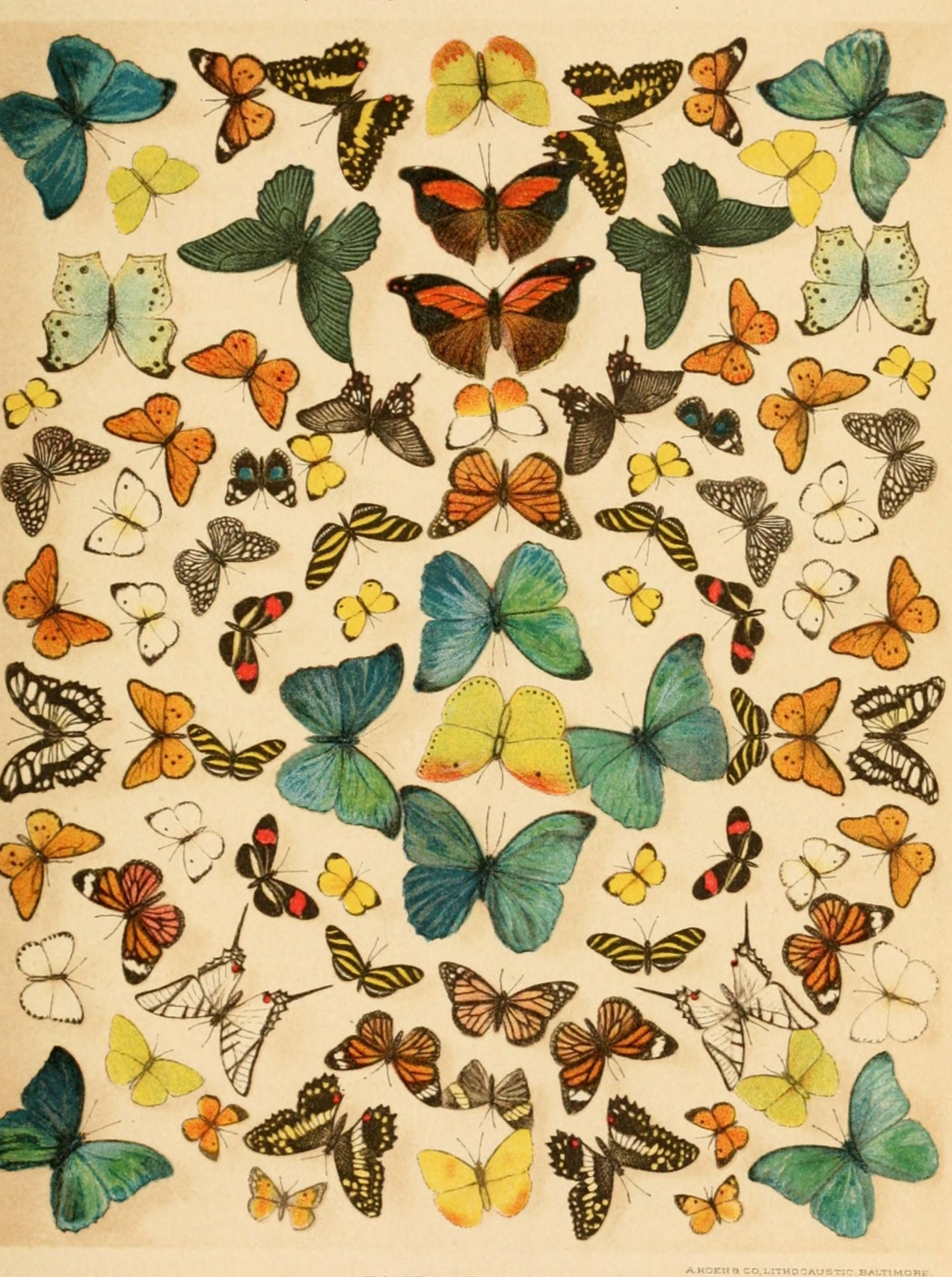 """Butterflies."" Paine. Page 831. Plate X."