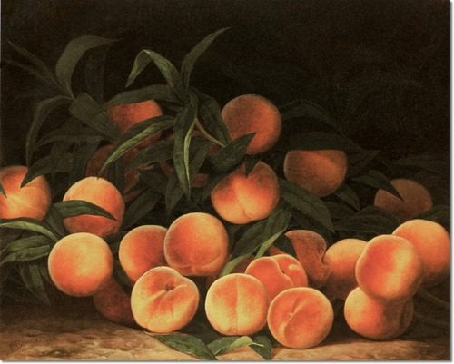 """Brown peaches."" No date."
