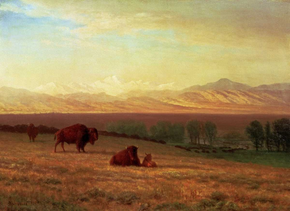 """Buffalo on the Plains."" ca. 1890."