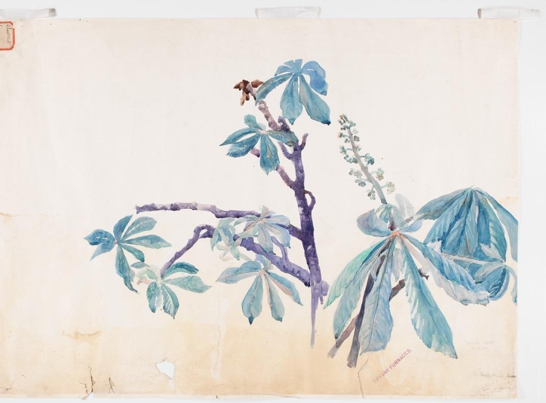 """""""Chestnut Leaves.' 1898-1982."""