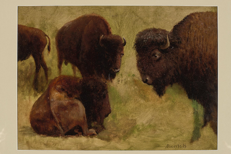 """Buffalo."" Late 19th c. Sketch."