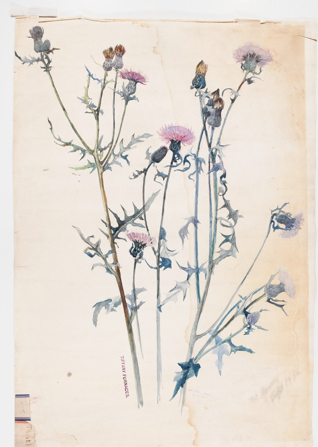 """Thistle."" 1902. Watercolor."