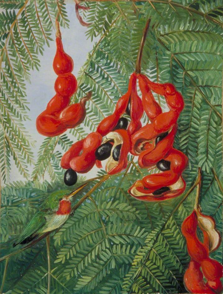 """The Wild Tamarind of Jamaica with Scarlet Pod and Barbet."" 19th c."