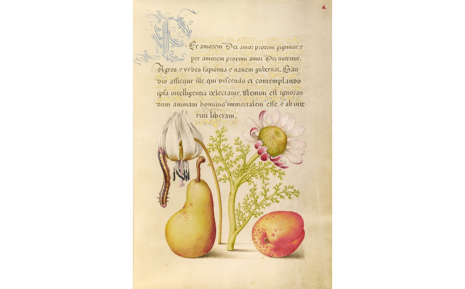 """Caterpillar, Dog-Tooth Violet, Pear, and Apricot."""