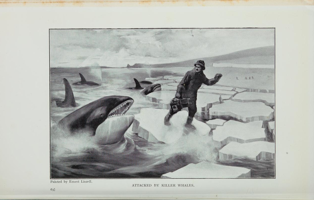 """Attacked by Killer Whales."""