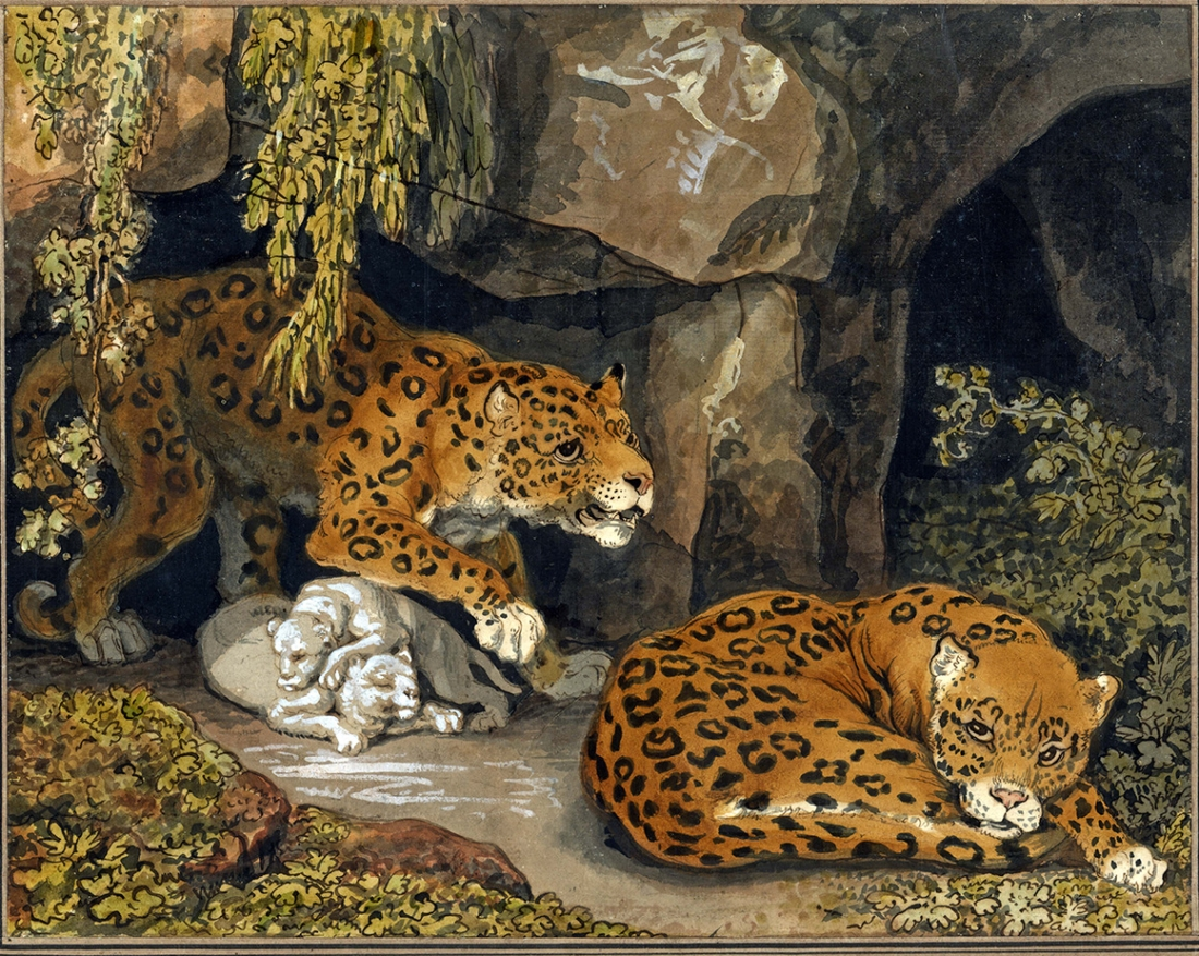 """""""A leopard and a leopardess with their cubs at the entrance to a cave."""""""