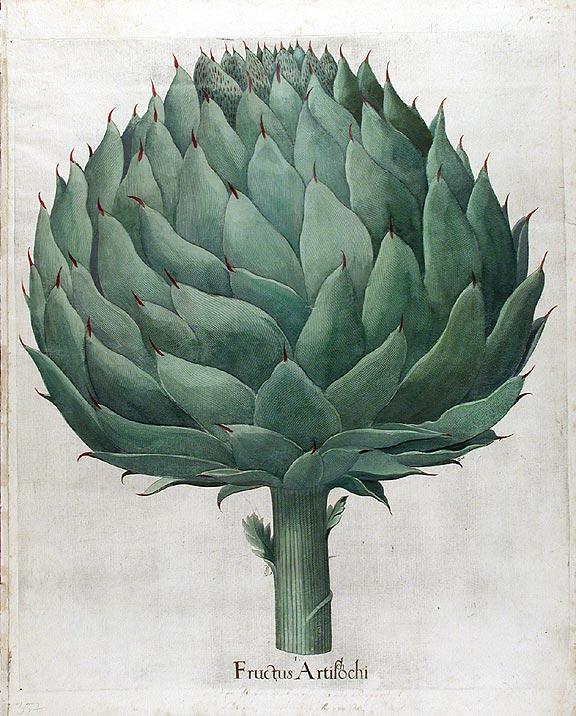"""Fructus Artichochi."" 1640."