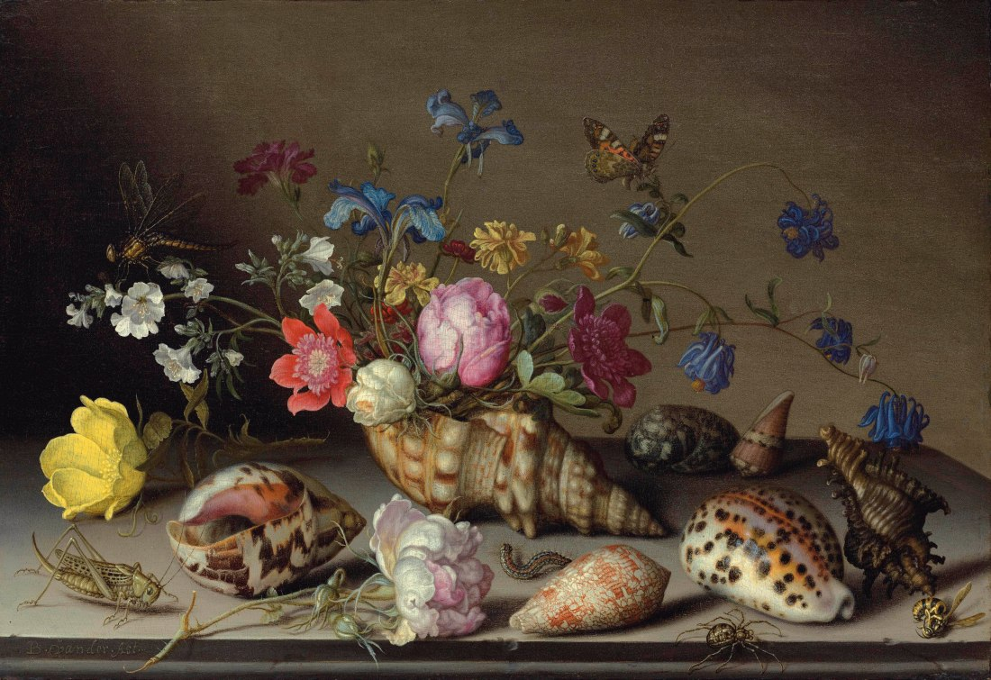 """""""Flowers, shells and insects on a stone ledge.""""No date."""