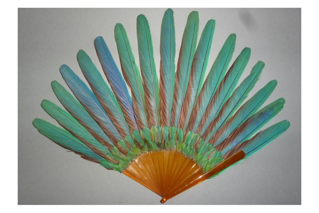 Fan. ca. 1910. Macaw feather with tortoiseshell.