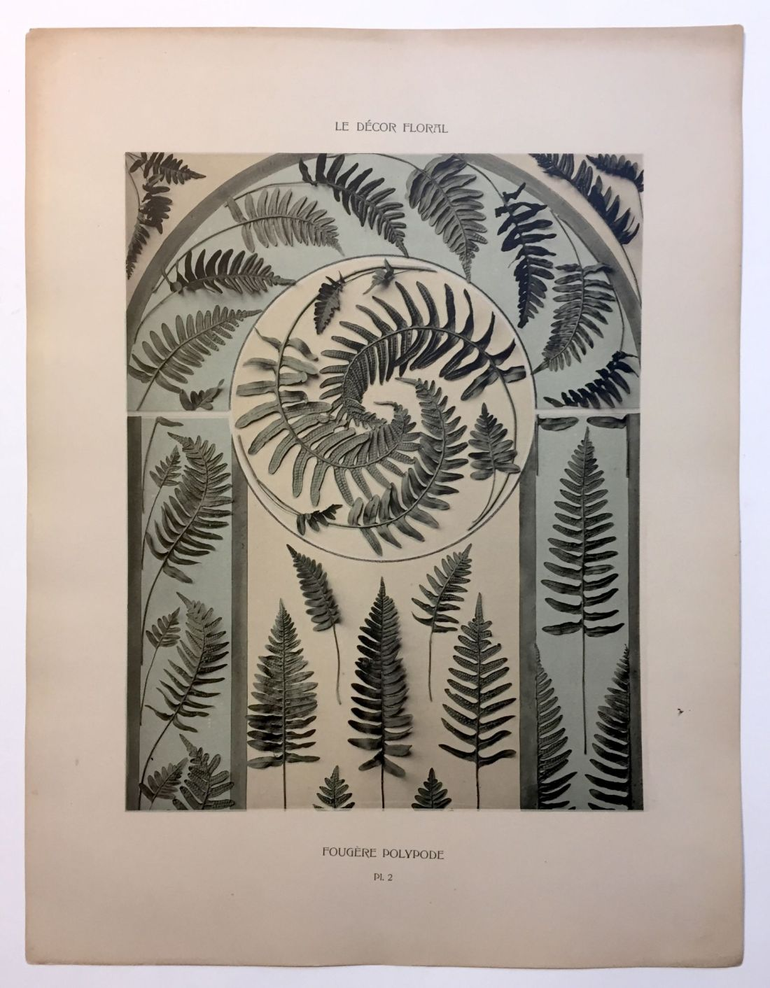 """Fougere Polypode."" Plate 2."