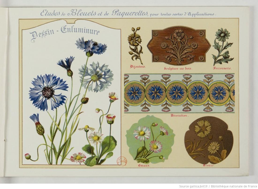 """""""Etudes de Bluets et de Paquerelles."""" Image 5."""