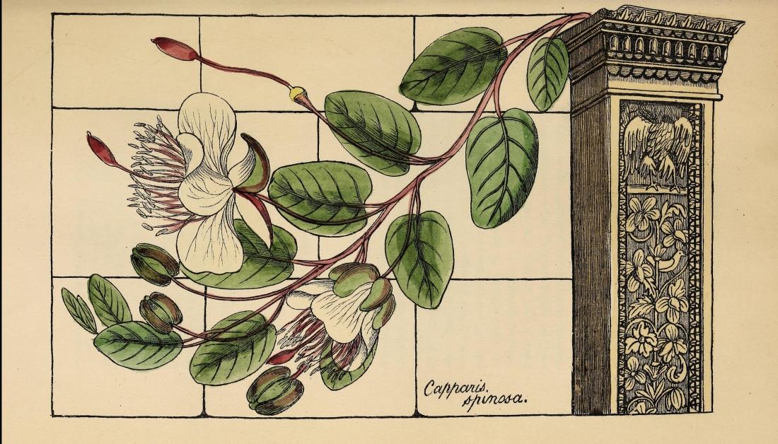 floraofcolosseum00deak_0087
