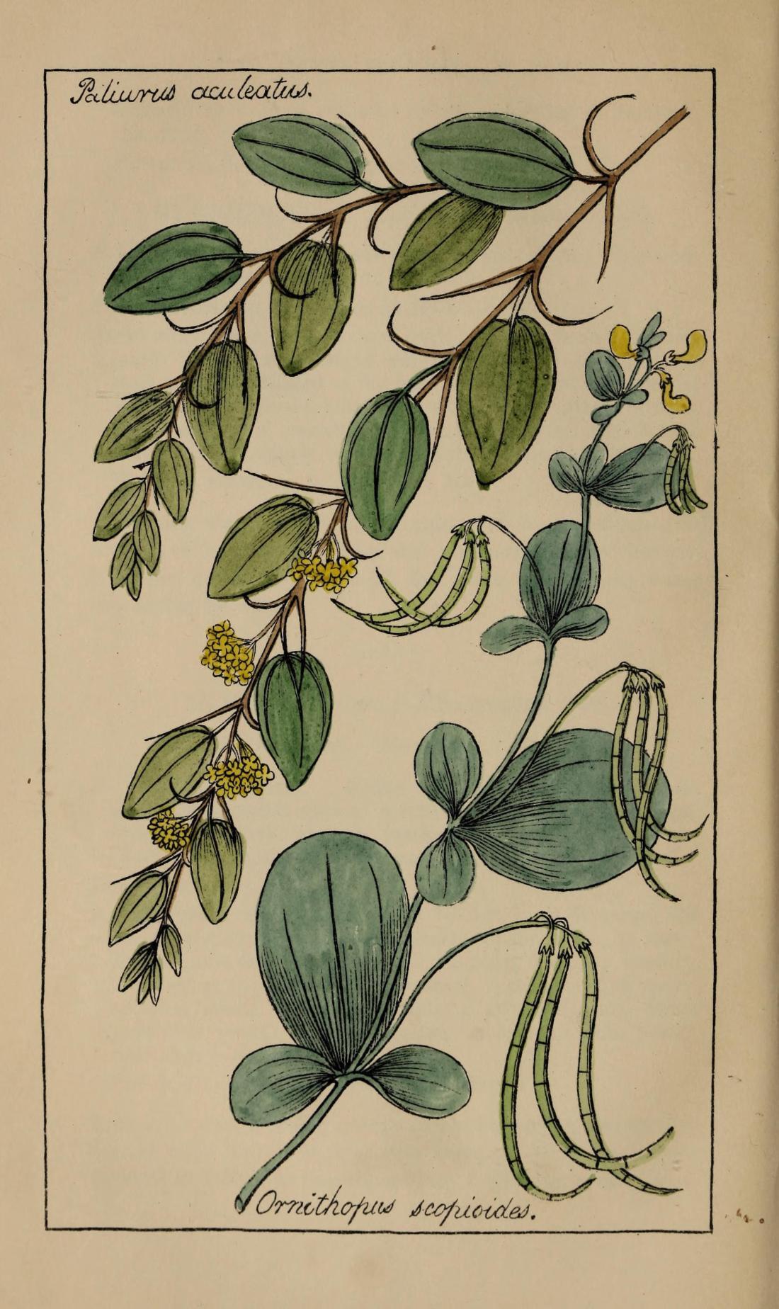 floraofcolosseum00deak_0126