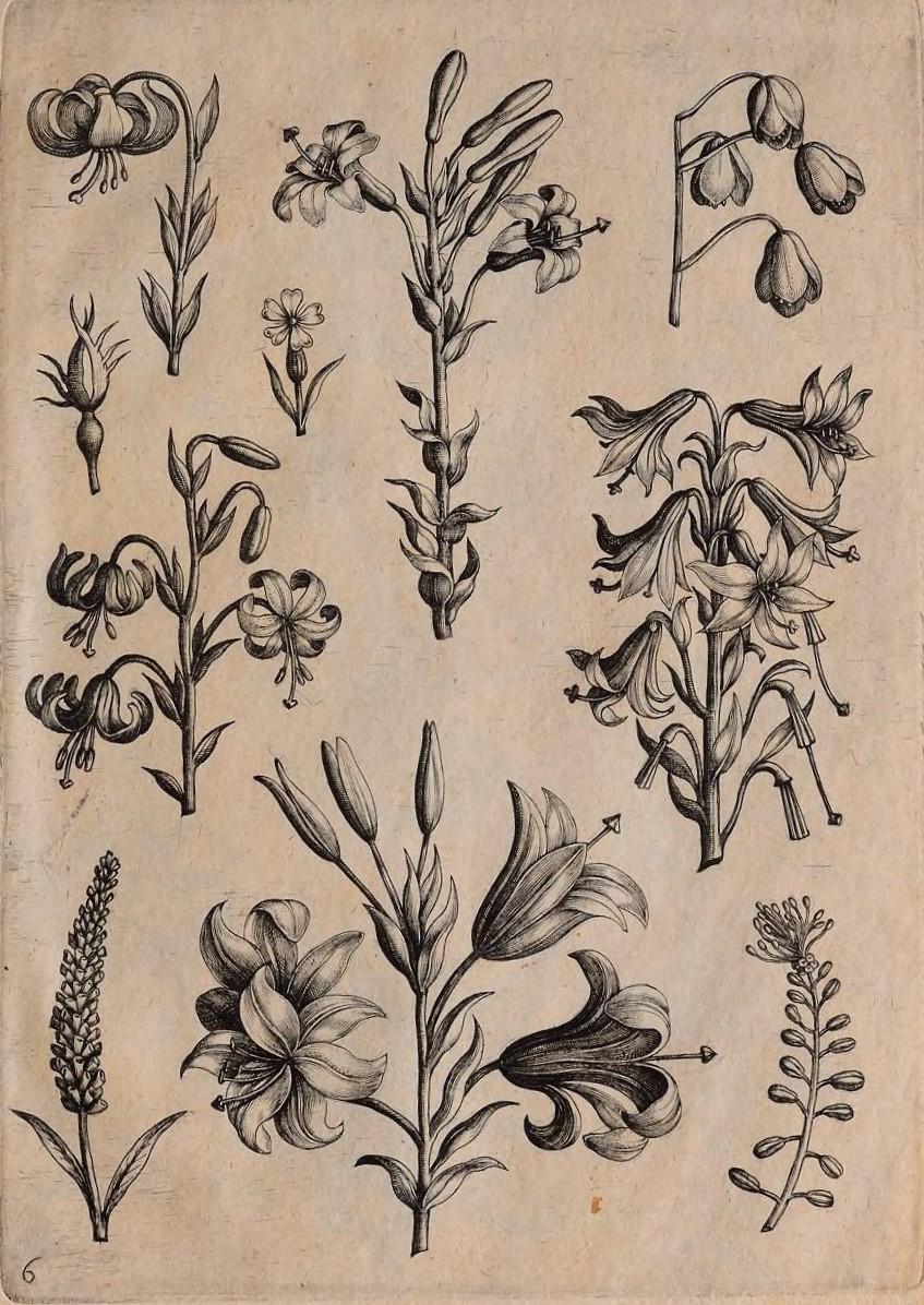 florilegium00coll_0015