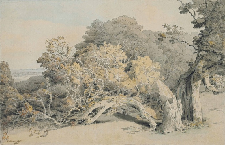 francis-towne-middlesex-1739-1816-london-a-study-of-a-tree-blown-down-in-peamore-park-near-exeter
