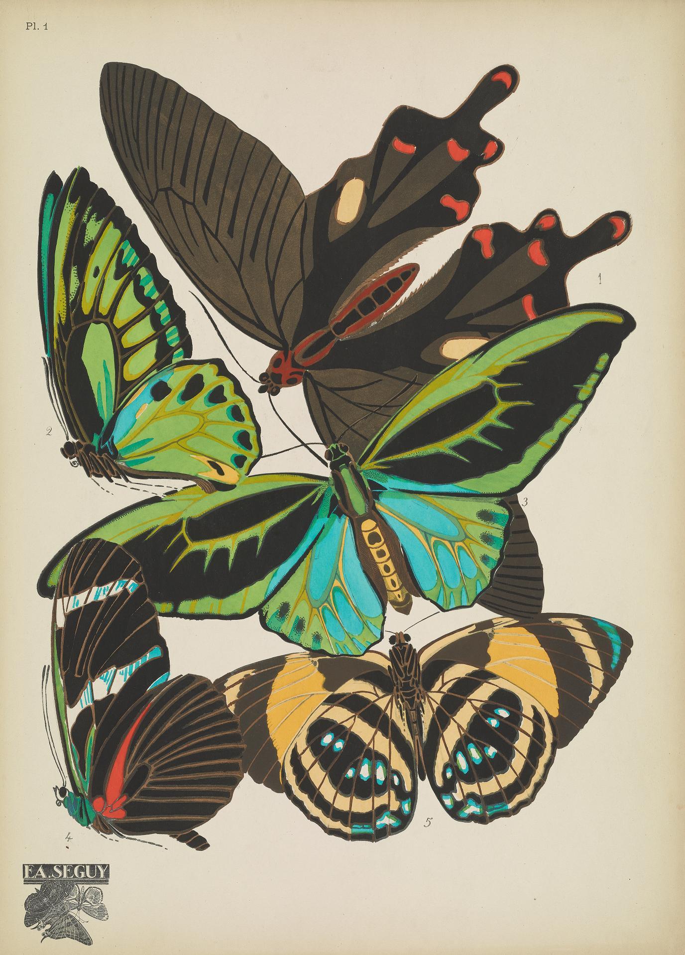 Papillons00SeYg_0007 (1)