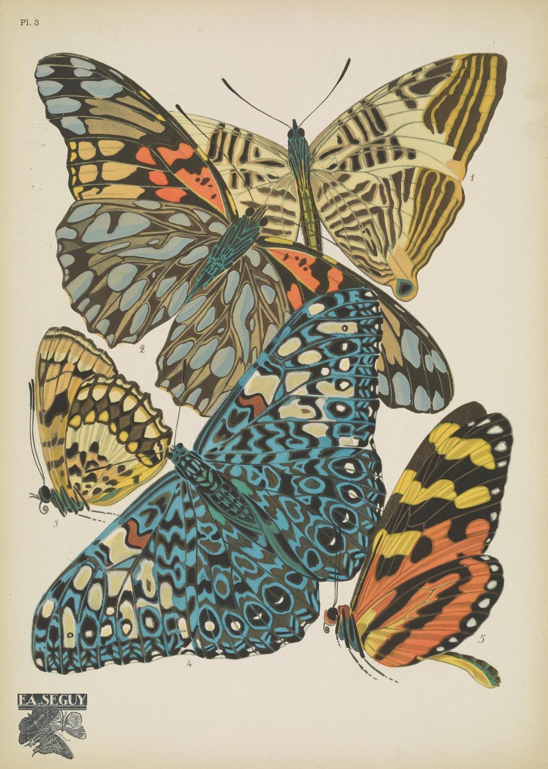 Papillons00SeYg_0011